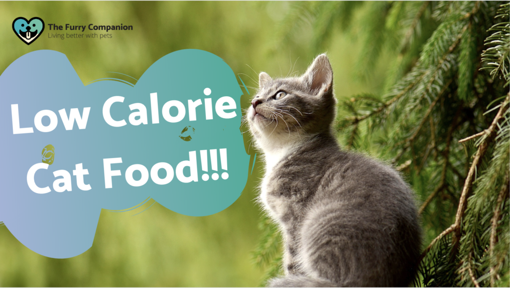 low calorie cat food