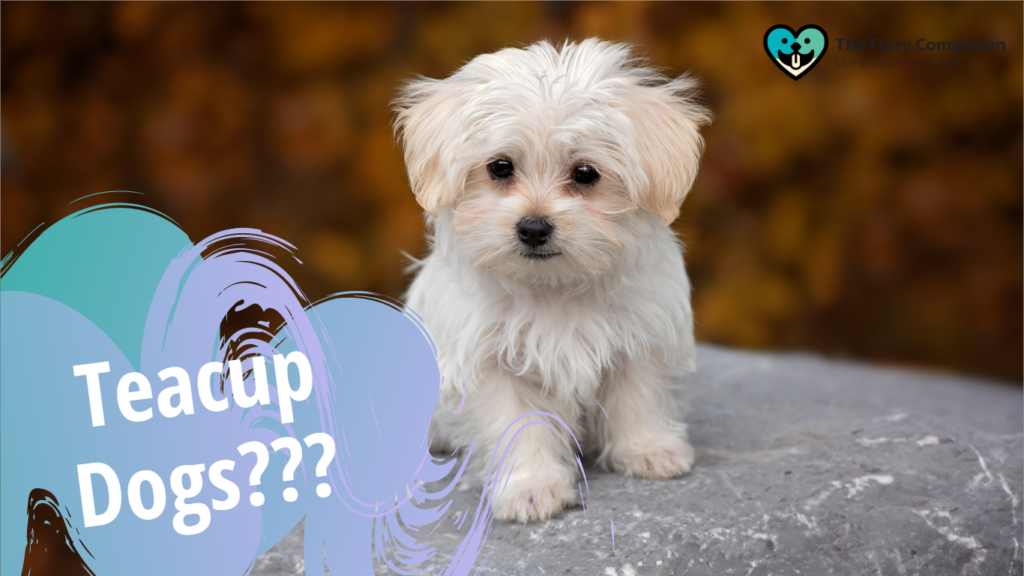 Should You Really Own A Teacup Dog