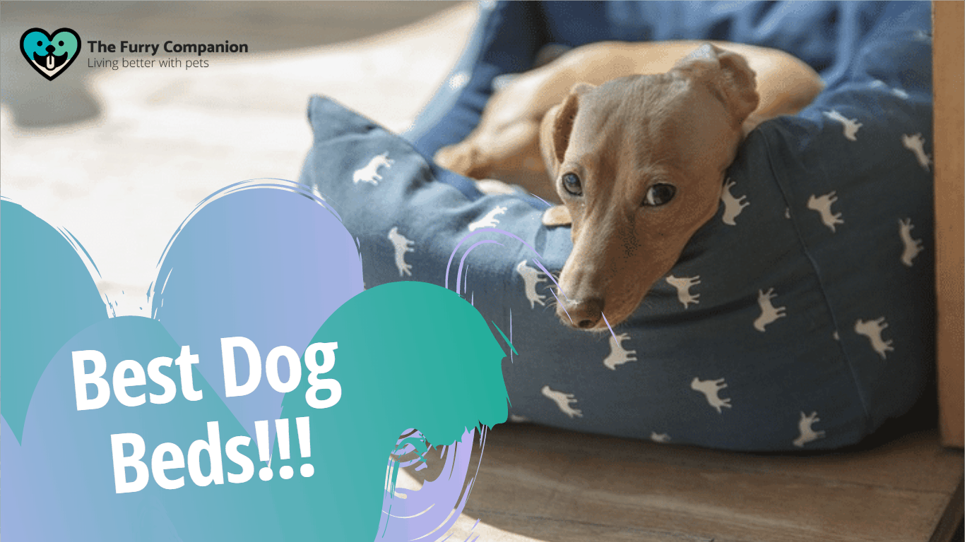 The Best Dog Beds For Your Dog S Best Rest The Furry Companion