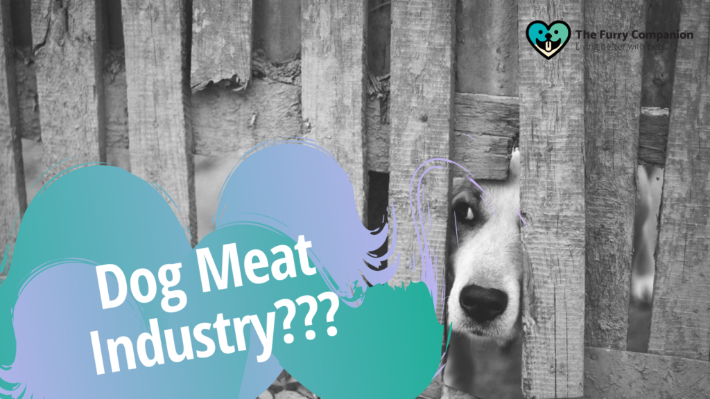 dog meat industry