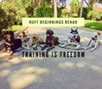 Ruff Beginnings Rehab Dog Training and Rescue